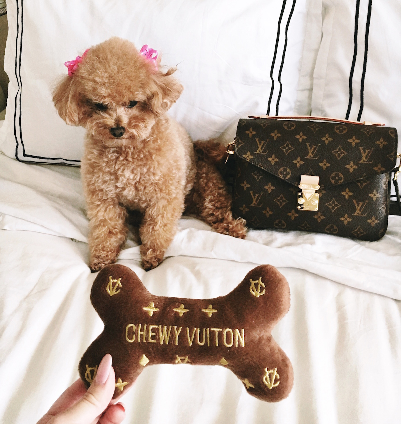 Blondie in the City | Instagram @HayleyLarue | Louis Vuitton Pochette Metis | Chewy Vuitton Dog Toy